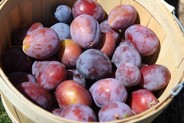 plums-dried to make prunes