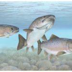 Ways to Cook Fresh Salmon