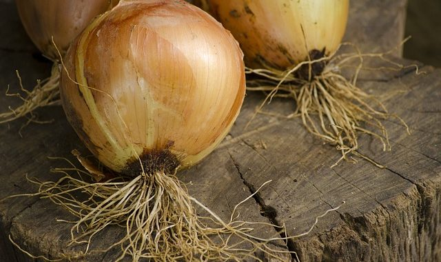 vintage onion recipes, raw onion, cooking with onions